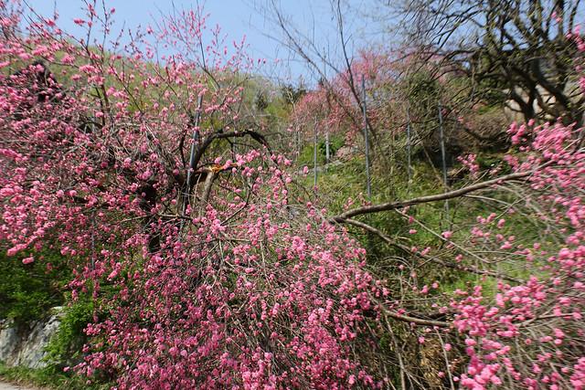 2014-04-19_00405_美の山.jpg