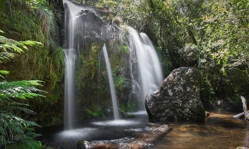 waterfall nationalpark rainforest newengland australia nsw newsouthwales ebor northerntablelands closedforest