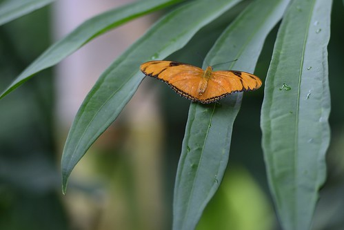 butterfly texas houstonmuseumofnaturalscience houstontexas juliabutterfly
