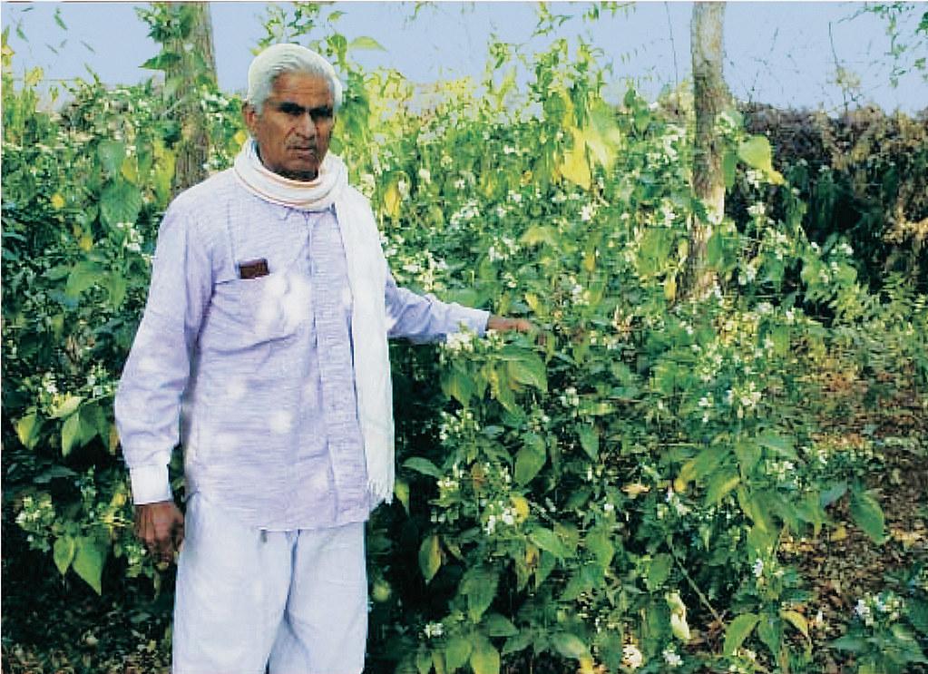 पथरीली जमीन पर करिश्मा कर दिखाया एक किसान ने