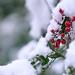 Merry Xmas by Sky Watch One