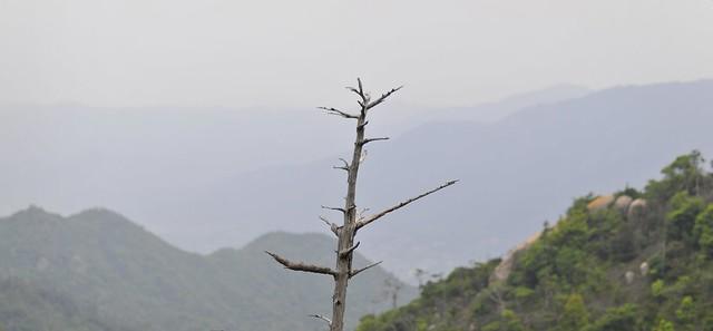Tree branch over Mount Misen