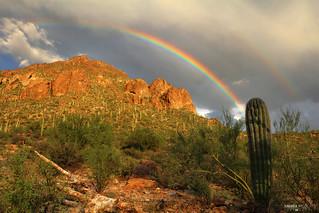 Saguaro National Park West - Tucson, Arizona