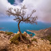 Small photo of A Tree along the Lycian Coast Trail