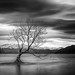 Lake Wanaka by Matthew Kelly LP