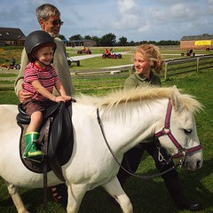 farm(0.0), eventing(0.0), stallion(0.0), trail riding(0.0), pack animal(0.0), jockey(0.0), animal sports(1.0), equestrianism(1.0), mare(1.0), equestrian sport(1.0), halter(1.0), horse(1.0), pasture(1.0), pony(1.0),