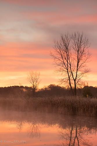 mist fog sunrise illinois pond preserves lakecounty foggyscenes lakecountyforestpreserves halfdayforestpreserve lcfpd halfdaypond