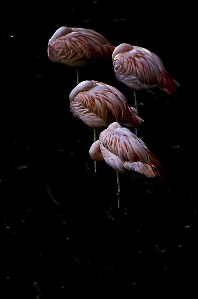 Flamingo lollipops