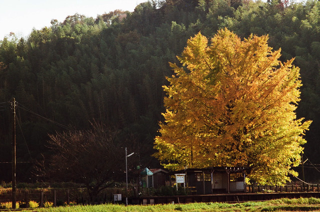Autumn of the small station