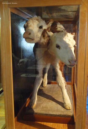 museum barn kansas museums meade twoheadedcalf daltongang daltonganghideout jhwhipple evadaltonwhipple