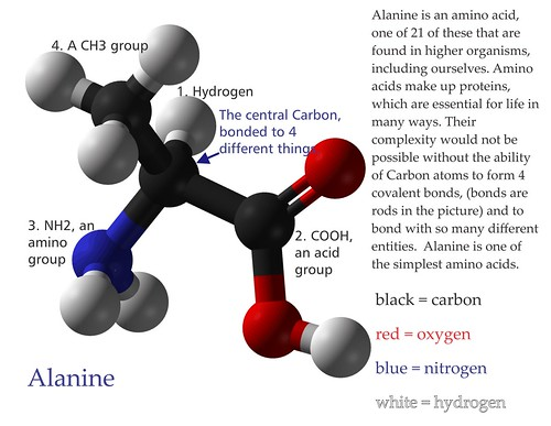 Alanine: Carbon can bond with four different things