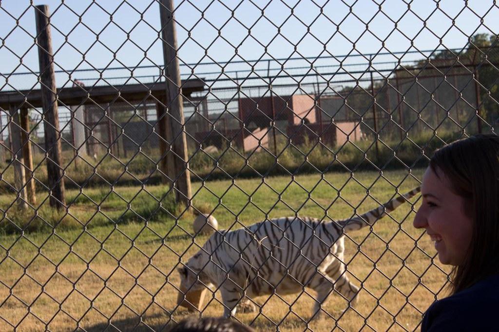 White Tigers box