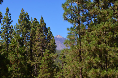 Pine forest and Mount Teide, Orotava Valley, Tenerife