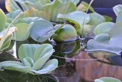 floating flora