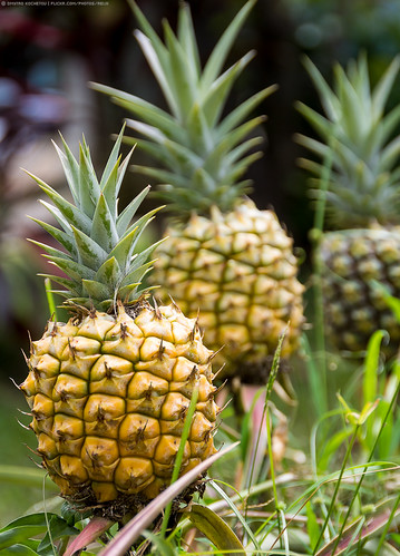 travel vacation usa macro nature hawaii view maui pineapple hawaiian canon60d