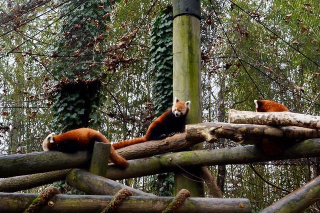 Firefox Trio