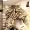 Tabby's Place December 2014 http://www.tabbysplace.org/adoptable.php