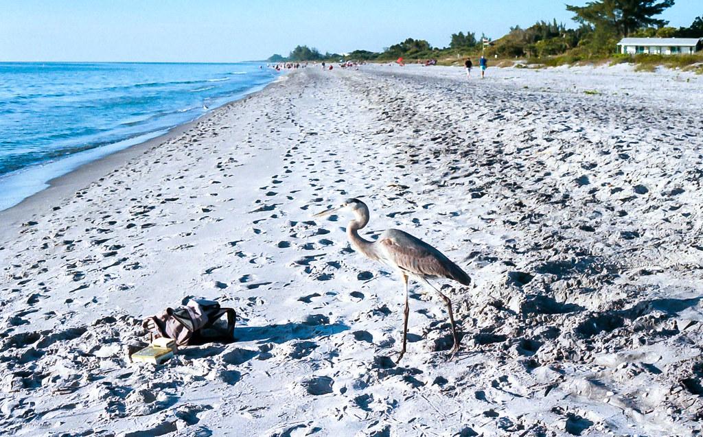 Manasota Beach Map - Florida - Mapcarta