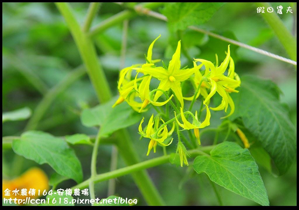金水農情164-安梅農場_DSC8321
