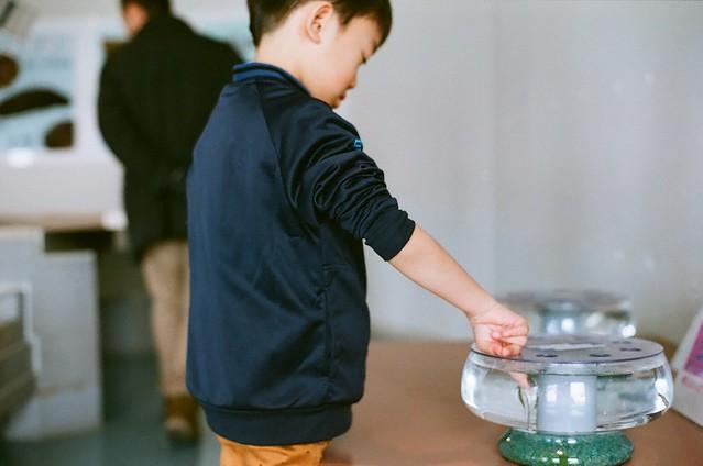 男鹿水族館Gao 指湯(セラピーフィッシュ)