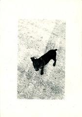 littleblackdog