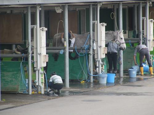 中京競馬場の内馬場の馬房