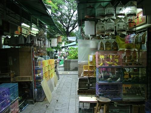 Picture 18_Yuen Po Street Bird Garden
