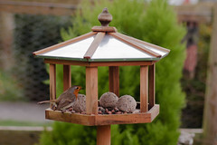 tool(0.0), animal fat(0.0), outdoor structure(1.0), bird feeder(1.0), lighting(1.0),