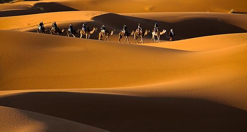 Camel Convoy in Sahara - Morocco