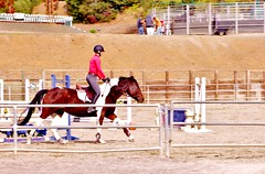animal sports, equestrianism, english riding, western riding, stallion, show jumping, equestrian sport, sports, equitation, horse,
