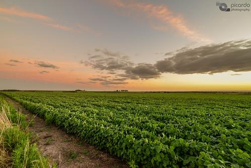 sunset summer sky clouds landscape uruguay atardecer evening countryside paisaje cielo nubes verano campo colonia soy santaana soja campaña campiña cropfields plantaciones juanlacaze