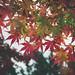 福壽山楓紅