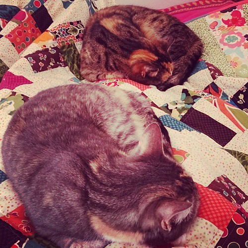 #cats and #quilts