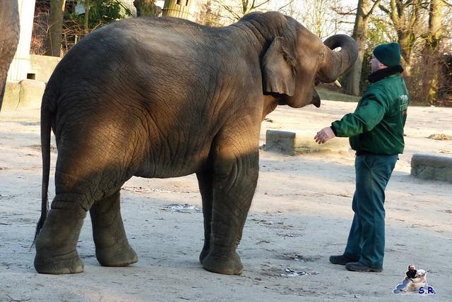 Tierpark Hagenbeck 13