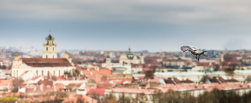 world city trip travel blue red vacation panorama white holiday black color colour green bird tourism nature yellow skyline photography nikon europe view flight baltic nikkor lithuania vilnius d600 nikond600