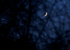 Crescent moon, Christmas night
