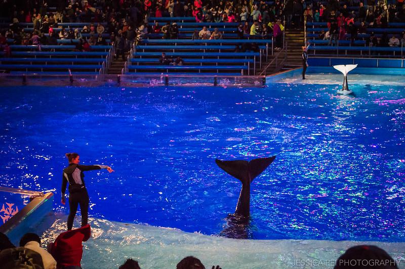 Shamu Killer Whale Christmas Show Sea World