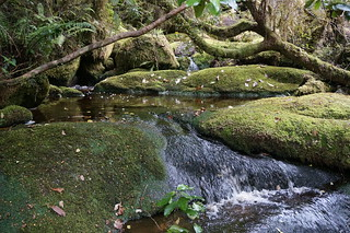 Stream along trail to Oparara Arch