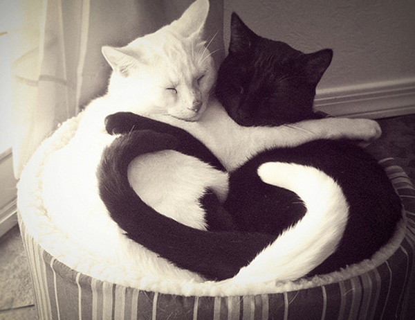 Cats playing Yin Yang 02  :-) - yin_yan_cats