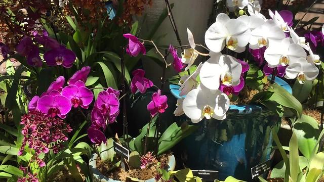 San Diego Botanical Gardens: Orchids (video)