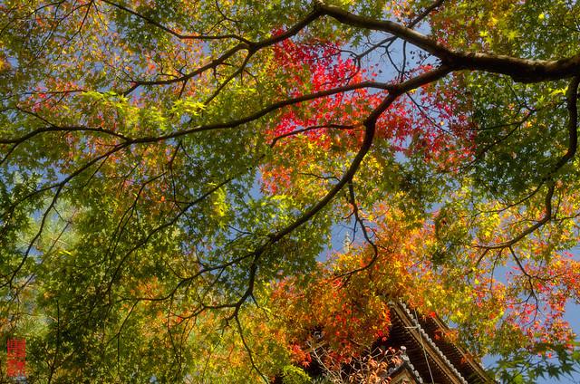 「秋の息吹き」 仁和寺 - 京都