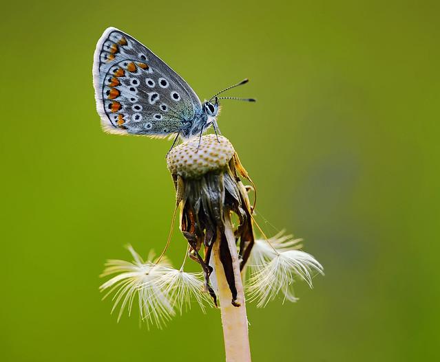Z Gallerie Butterfly butterflies - a galler...