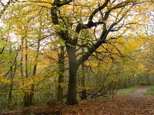 In Nut Wood