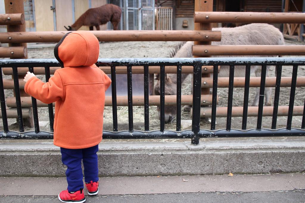 上野動物園_ロバ
