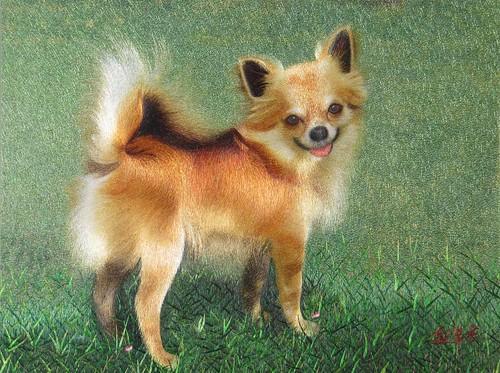 Pomeranian silk embroidery painting