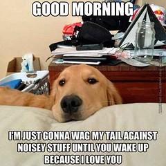 :D #dog #cute #adorable #pet #pets #dogsofinstagram #ilovemydog #dogs #instagramdogs #dogstagram #nature #animal #animals #puppy #puppies #pup #petstagram #picpets #cutie #life #doggy #petsagram #dogoftheday #loveit #tagsta #tagsta_nature