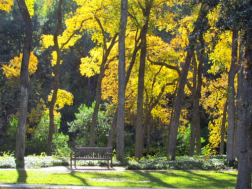 autumn bench dallas texas foliage turtlecreek