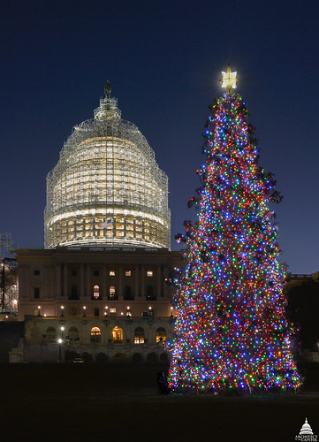 The 88-foot white spruce harvested from the Chippewa National Forest now stands as the 2014 U.S. Capitol Christmas Tree. The tree, on the West Front lawn of the Capitol, will remain lit from dusk until 11 p.m. daily through Jan. 1. (Architect of the Capitol)