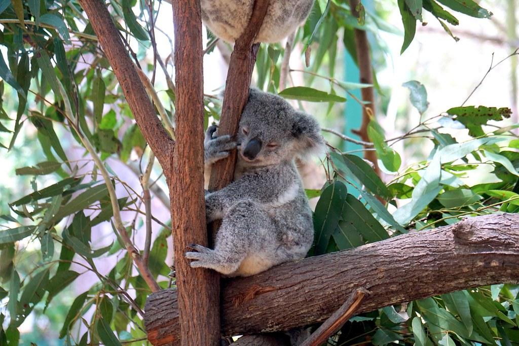 Currumbin Wildlife Sanctuary - trip review-002