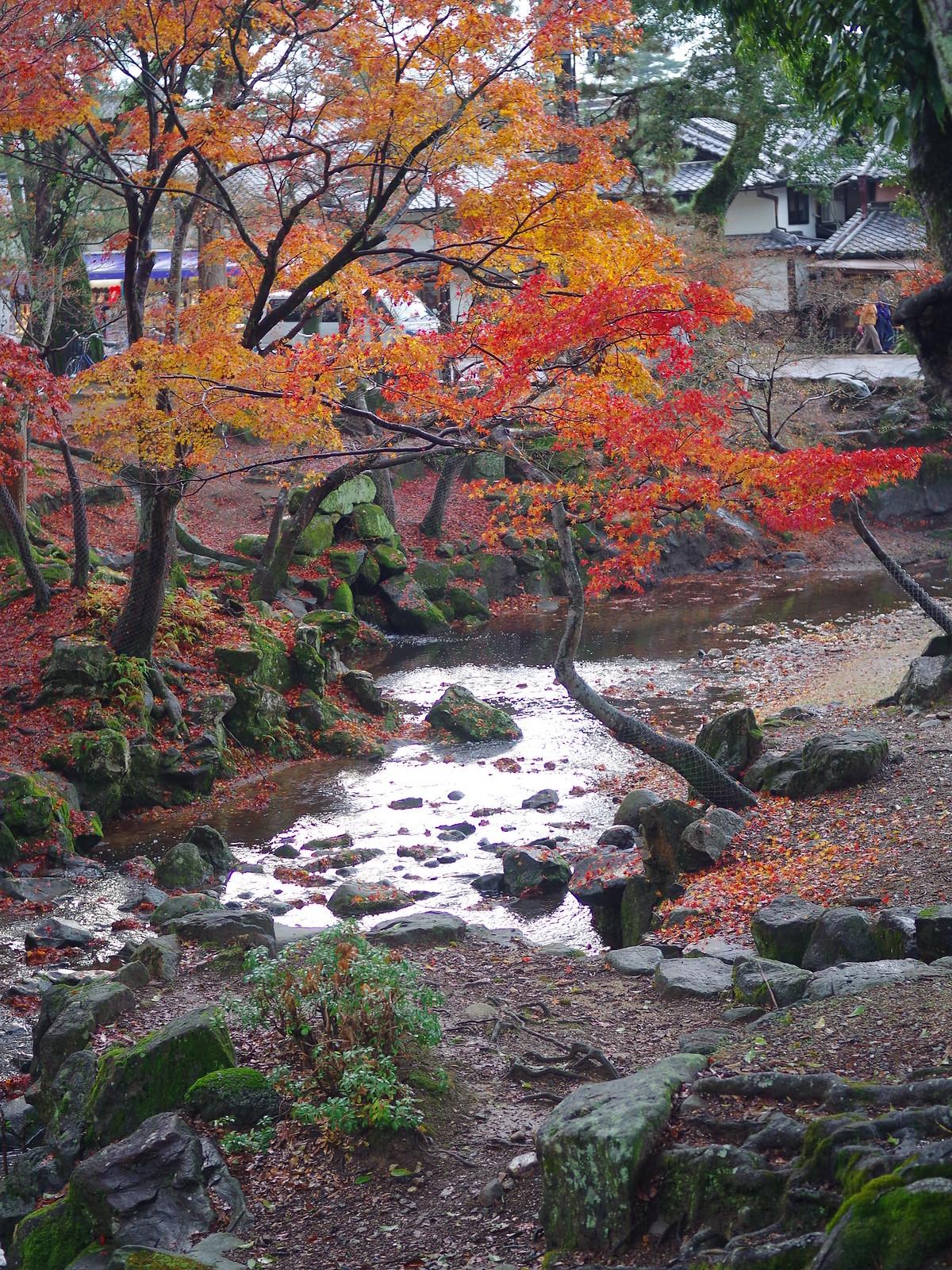 20141201奈良紅葉